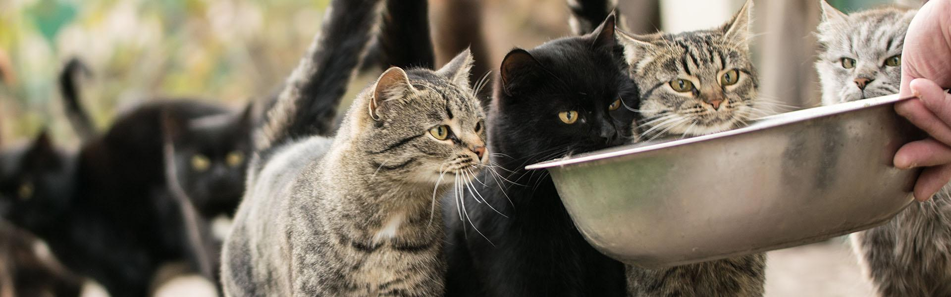 Cats wait to be fed from a bowl